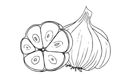 Garlic, a linear black-and-white drawing.Seasoning, spicy.Coloring, graphics, freehand drawing.