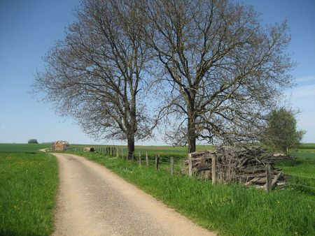 symetric: Rural landscape in Franche-Comte, France with a road and 2 symetric trees