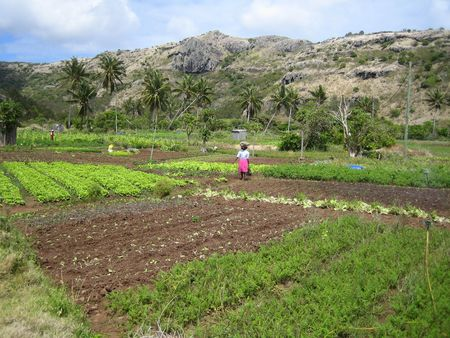 subsistence: Subsistence agriculture in Rodrigues Stock Photo