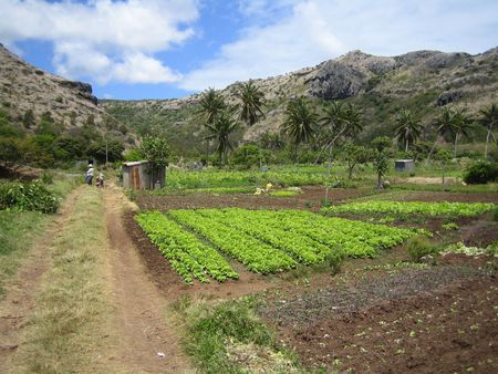 Subsistence agriculture in Rodrigues Stock Photo - 3778677