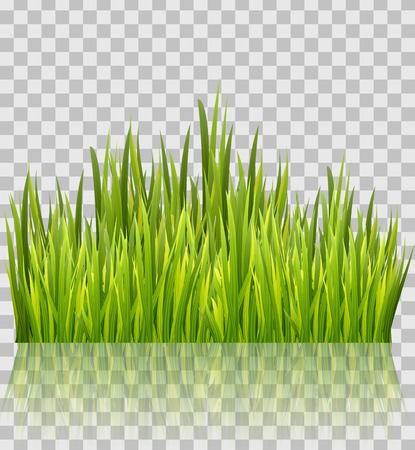 Fresh green grass border isolated on transparent glossy background. Decoration element. Vector illustration