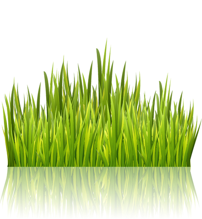 Green grass border isolated on white glossy background. High fresh grass decoration element. Vector illustration Ilustração