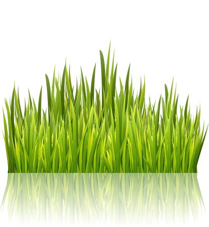 Green grass border isolated on white glossy background. High fresh grass decoration element. Vector illustration Illustration