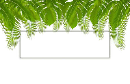 Beautiful vector floral tropical palm leaves frame, place for text. Tropical banner with exotic leaves and plants on white background. Ilustracja