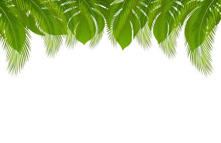 Vector exotic tropical summer frame border with palm leaves and jungle leaf. Invitation design element for Wedding marriage event and Hawaiian party with green tropical leaves