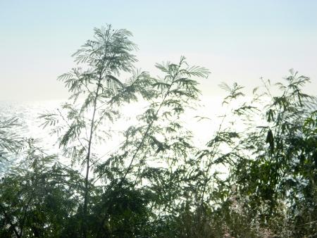glare: plants with glare