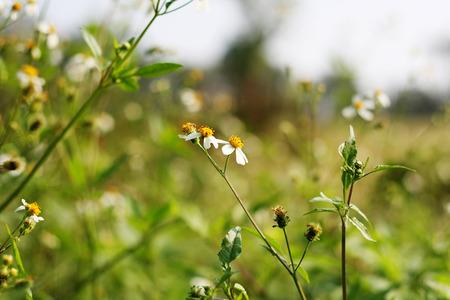 petites fleurs: Petites fleurs Banque d'images