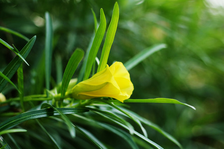 warblers: Yellow flowers