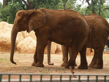 Elephants photo