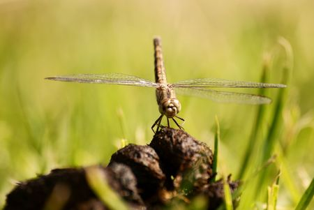 Dragon Fly Stock Photo - 6685758