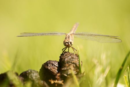 Dragon Fly Stock Photo - 6685753