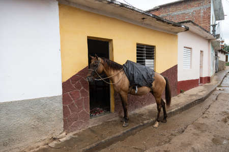 Horse waiting at house in the streets of Cuban town Banco de Imagens