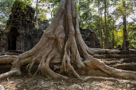 Ta Prohm, Angkor Wat, Cambodia, trees engulfing the temple structures with roots