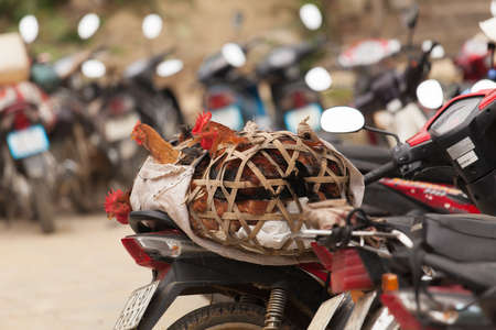 Bac Ha Market Vietnam one of the biggest in all of North Vietnam