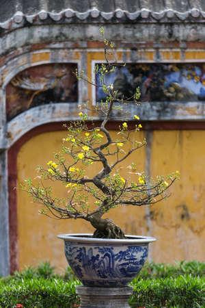 Very old bonsai trees in Hue, Vietnam. Beautiful detail against coloured walls Banco de Imagens