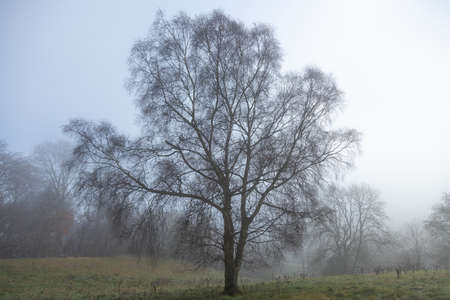 Beautiful tree standing in mist on edge of woodland forest blue white sky