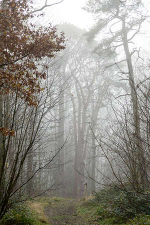 Straight path through mist to forest with ghostly trees in distance feeling lost