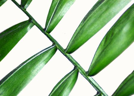 Close up image of a parlor palm