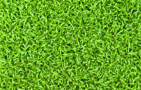 Bright green fresh grass background