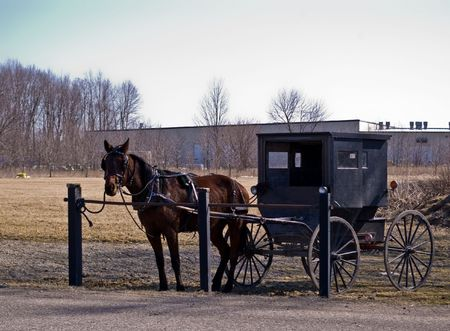amish buggy: Amish horse and buggy at a hitching post
