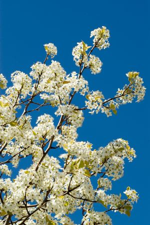 Flower blossoms on a tree branch against a bright blue sky