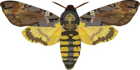 hawk-moth Vector