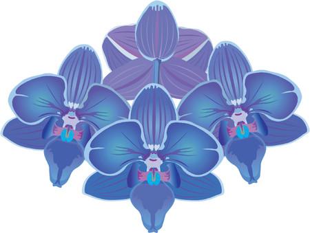 flora vector: orchid blue