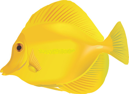 ichthyology: Yellow tang
