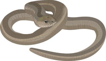 anguis: Blind Worm