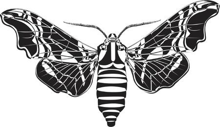 lime hawk-moth Stock Vector - 599401