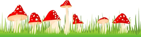 food poison: Toadstools, mushrooms in the grass