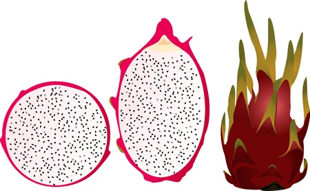dragon fruit: Dragon fruit whole and in cross-section Illustration