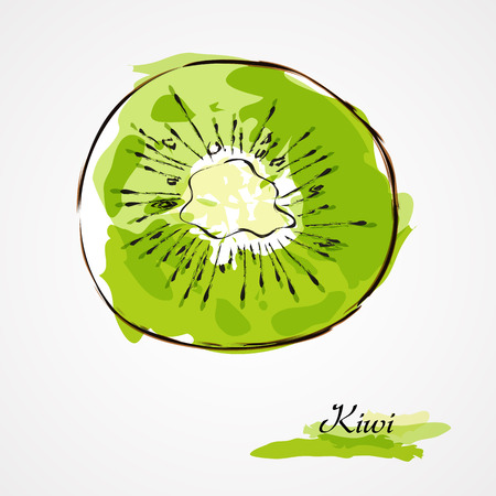 Hand drawn vector kiwi, citrus, tropical fruit slice, piece, on light background
