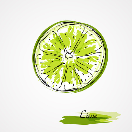Hand drawn vector lime, citrus fruit slice, piece, on light background Vector