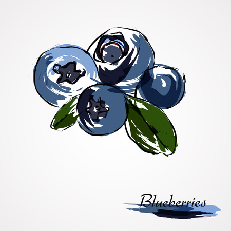 Hand drawn vector of ripe blueberries, huckleberries fruits on light background