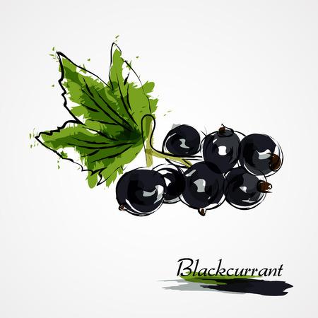 Hand drawn vector blackcurrant fruit on light background