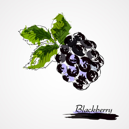 Hand drawn vector ripe blackberry fruit on light background Vector