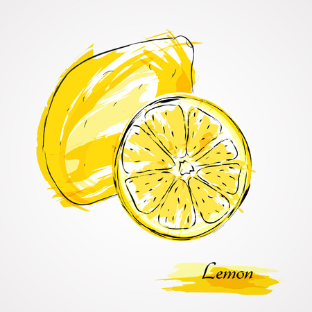 lemon: Hand drawn vector ripe lemon citrus fruit, whole and slice