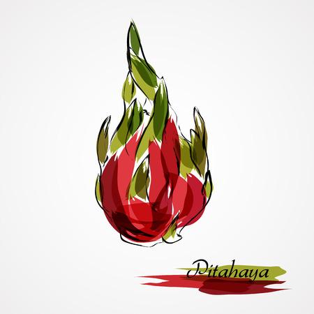 Hand drawn vector red ripe pitahaya, dragonfruit fruit on light background