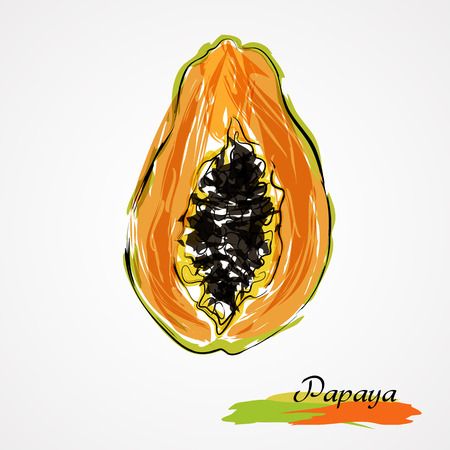 Hand drawn vector ripe half of, slice papaya fruit on light background Ilustração