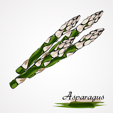 Hand drawn vector ripe green asparagus on the light background