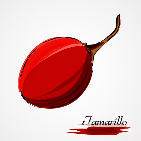 Hand drawn vector ripe red tamarillo fruit, whole and slice on the light background Illustration