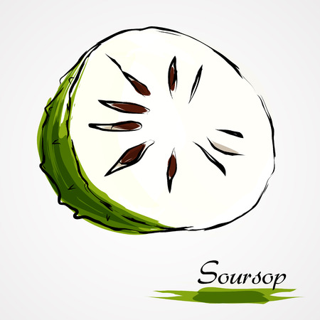 annona: Hand drawn vector part of ripe green soursop, guanabana on the light background Illustration