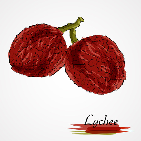 Hand drawn vector ripe lychee fruits on the light background