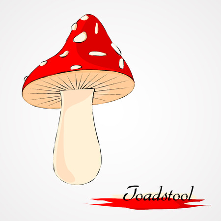 undergrowth: Hand drawn vector red toadstool