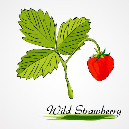 wild strawberry: Hand drawn vector ripe wild strawberry fruit on light background