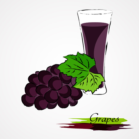 prune: Hand drawn vector purple, ripe fruit of the grape juice in glass on light background Illustration