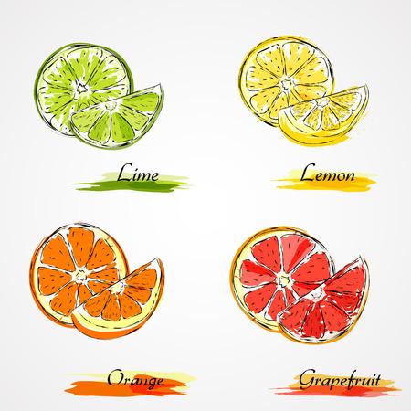 hand getekende vector slice en stuk van citrus Stock Illustratie