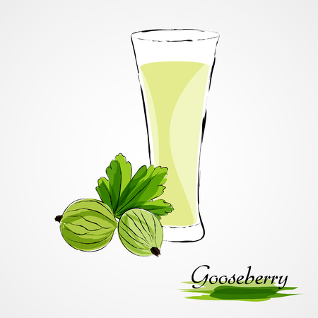 flavoring: Hand drawn vector ripe green gooseberry fruits and juice in glass on the light background