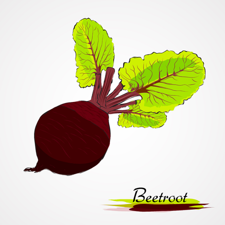 flavoring: Hand drawn vector ripe black beetroot vegetable with leaves on the light background